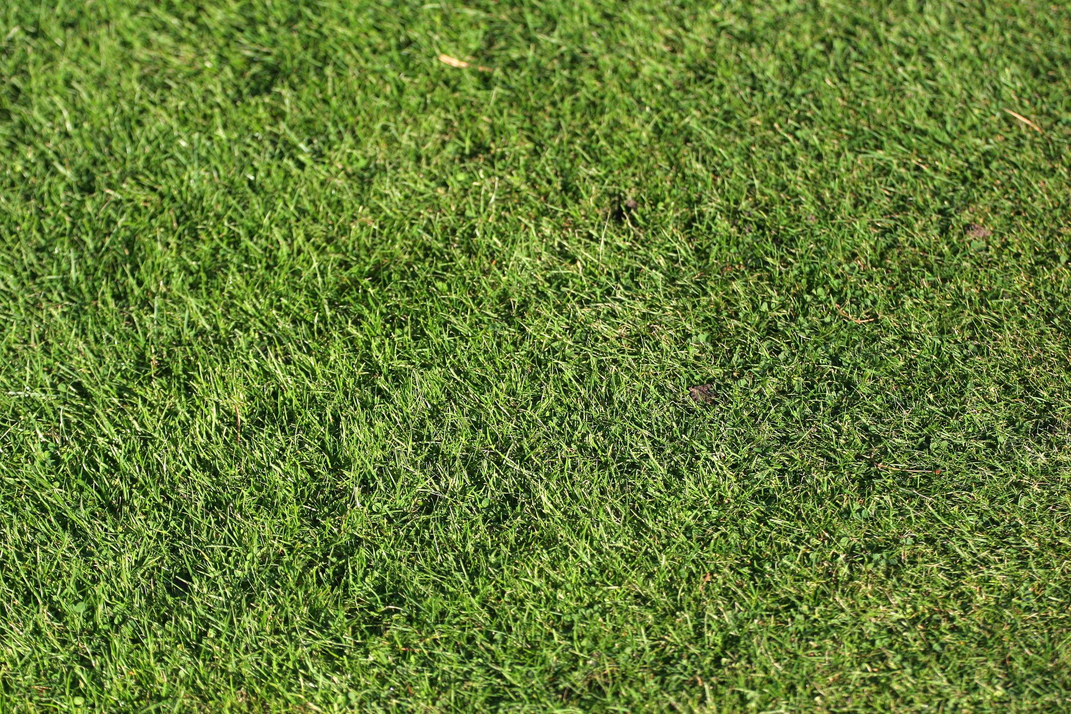 Lawn_Pic_google